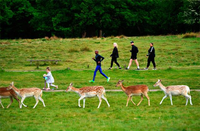 mo farah running entre ciervos